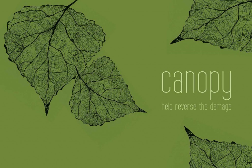 canopy-leaf